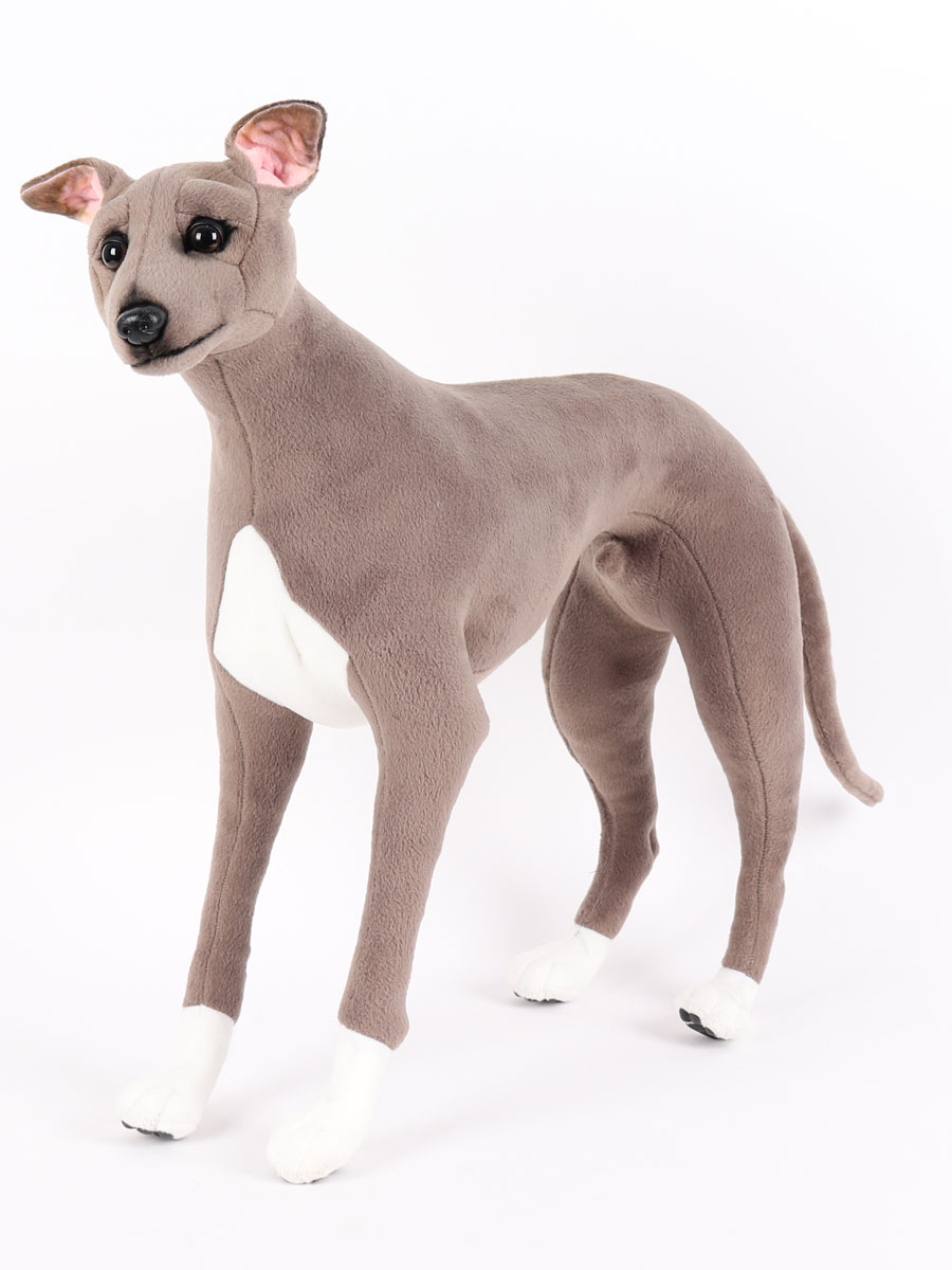 italian-greyhound-seal-color-standing-24l6w20h-inches-6646.jpg